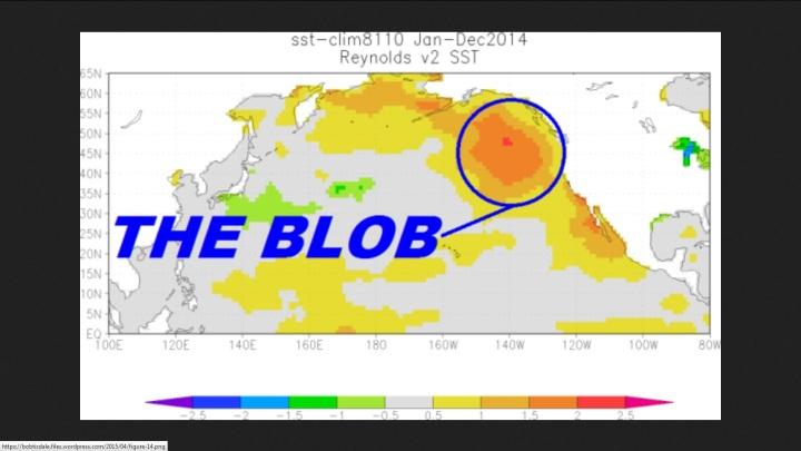 THE BLOB im östlichen Nordpazifik von Januar bis Dezember 2014