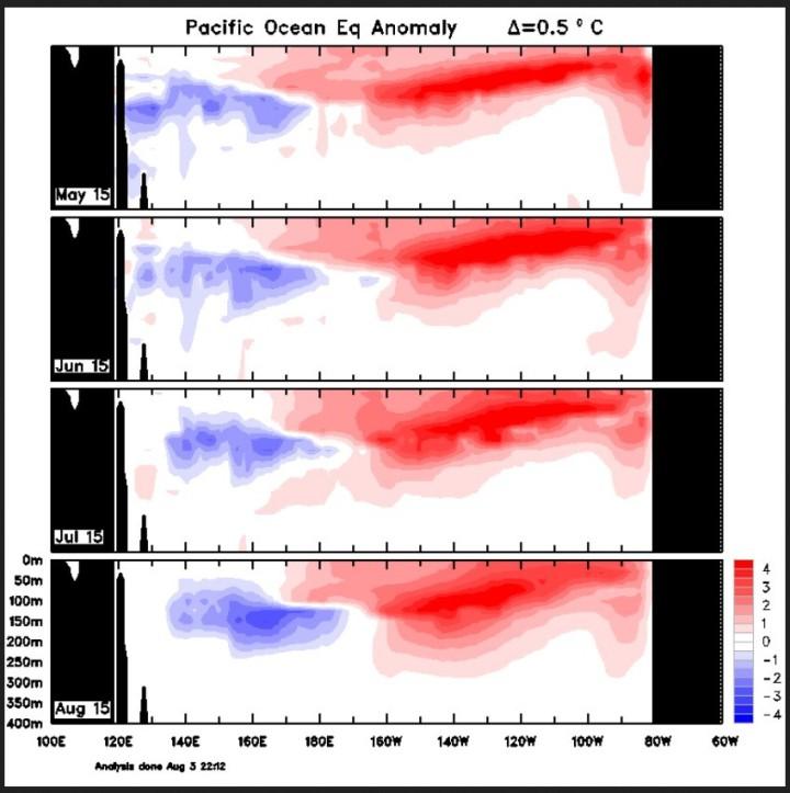 Die Grafiken des austrtralischen Wetterdienstes BOM zeogen von oben mnach unten die Entwicklung der Temperaturabweichungen bis zu 300m unter Wasser. Die roten Farben zeigen positive Abweichungen infolge der warmen downwelling-Phase einer äquatorralen Kelvinwelle, die zu El Nino-Bedingungen auch an der Wasseroberfläche bei den SST führt. Quelle: