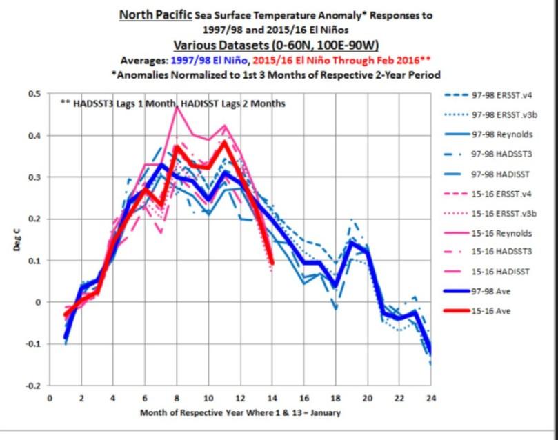 """Der Plot von BOB TiSDALE zeigt den Verlauf der SSTA im Nordpazifik bei den kräftigen El Niño-Ereignissen 1997/98 und 2105/16. Die monatlichen durchschnittlichen SSTA mehrerer Datenanbieter lassen den überraschenden Absturz der SSTA seit Dezember 2015 erkennen, der mit dem Verschwinden des warmen """"BLOB"""" zudammenhängen dürfte. Quelle:"""
