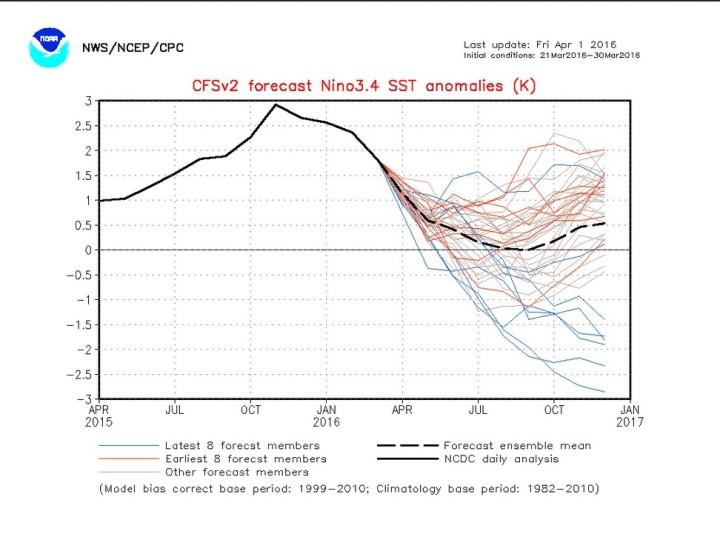 Der Plot stellt die seit 29.3.2016 korrigierte ENSO-Pognose vom 1.4.2016 für die Abweichung der Meeresoberflächentemperaturen (SSTA) im maßgeblichen ENSO-Gebiet 3.4 für die kommenden Monate vor. Die aktuellen (korrigierten) Prognosen (blaue Linien) erreichen teils bereits im Juni 2016 La Niña-Werte von -0,5 K und kälter, im Herbst 2016 werden in mehreren Rechnungen berewits -2,0 K unterschritten: Eine kräfte kalte La Niña ist im Anmarsch. Die älteren (unkorrigierten) zu warmen Modelläufe halten den Durchschnitt derzeit noch (fälschlich) im positiven Bereich, dies sollte sich in den kommenden Tagen zunehmend ändern. Quelle: