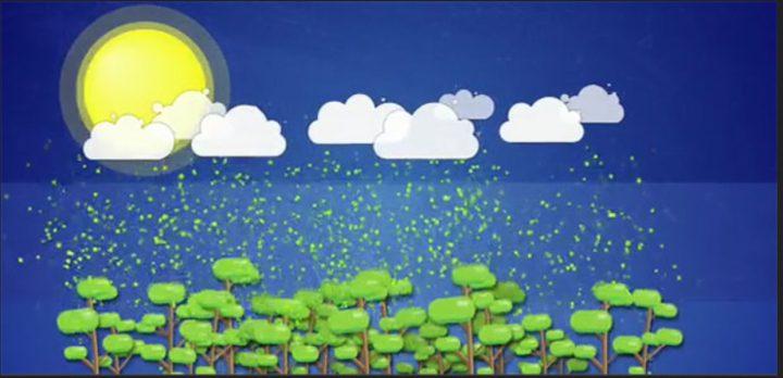 Moleküle aus den Ausdünstungen von Bäumen erweisen sich als verblüffend effektive Wolkenkeime. Quelle: