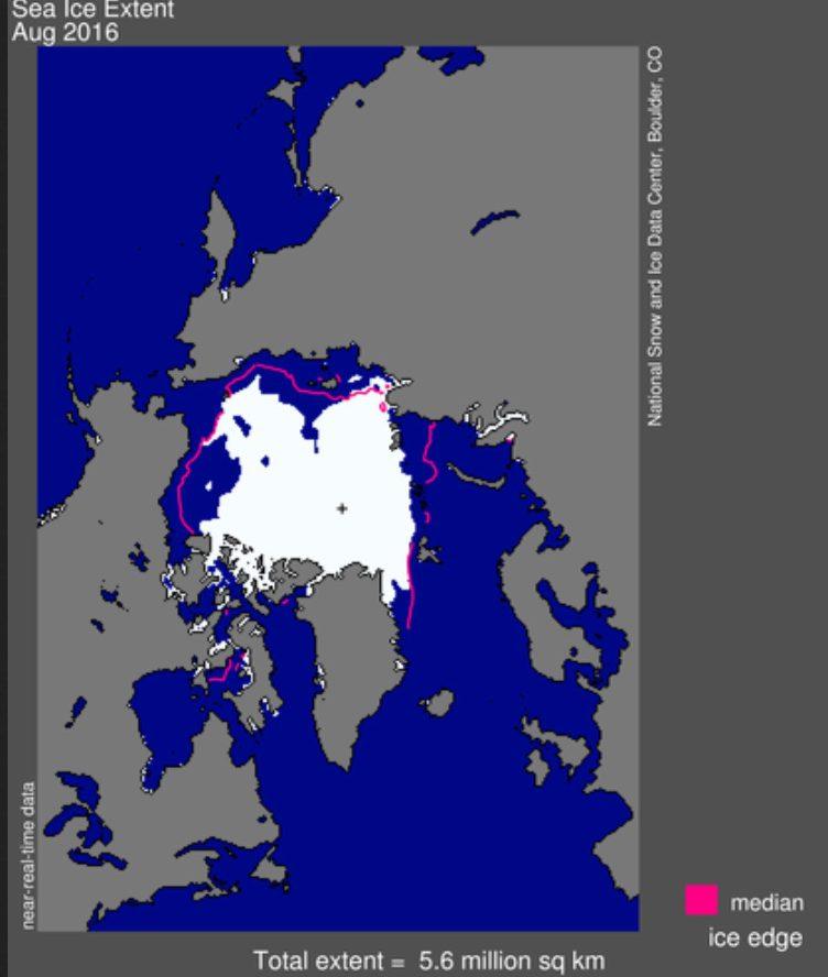 Die NSIDC-Meereisgrafik (extent) von August 2016 zeigt eine durchgehende Veresisung des Westausgangs der nordlichen Route durch die Nordwestpassage. Die süliche - Amundsen's - Route - weist im Südteil unterbtochne Eisfelder aus (weiße Flächen). Quelle: