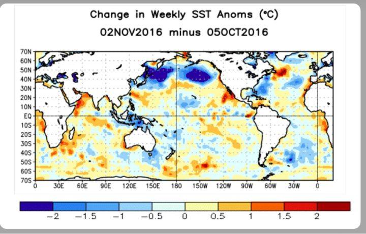 Der Screenshot zeigt die Differenzen der Wochenabweichungen (Anomalies) der Meeresoberflächentemperaturen (SSTA) zwischen der ersten Oktober- und der ersten Novemberwoche 2016 aus. Vor allem der nördliche Nordpazifik weist große Flächen mit ungewöhnlicher kräftiger Abkülung bis zu 2 K Abkühlung (blaue Farben) auf. Quelle: